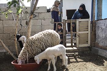 ووداد تتفقدان خرافهما التي تشكل قاعدة مشروعهما. © - تصوير مكتب الأمم المتحدة لتنسيق الشؤون الإنسانية