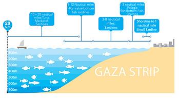 نوع الأسماك المصيدة حسب عمق مياه البحر والأميال البحرية