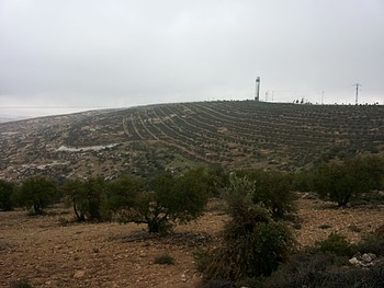 Asfar's settlement cultivated area, March 2014