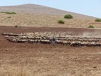 Palestinian herder from al Baqaia area, Jordan Valley, May 2017. ©  Photo by OCHA.