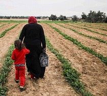 Woman in her peas field on her land in Shokat as Sufi, Gaza Strip. Photo by Wissam Sameer Mahmoud Nassar for ACTED oPt, September 2017