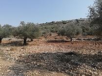 Mustafa's land After the rehabilitation