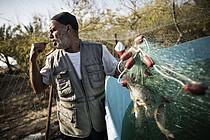 صياد من غزة يجمع الأسماك من شبكته  © - تصوير منظمة الأغذية والزراعة / ماركو لورغاني