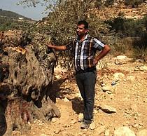 أشجار اقتلعت في سياق بناء الجدار في منطقة بيت لحم. تصوير مكتب تنسيق الشؤون الإنسانية